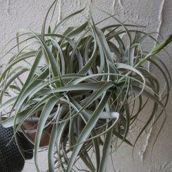 airplants001